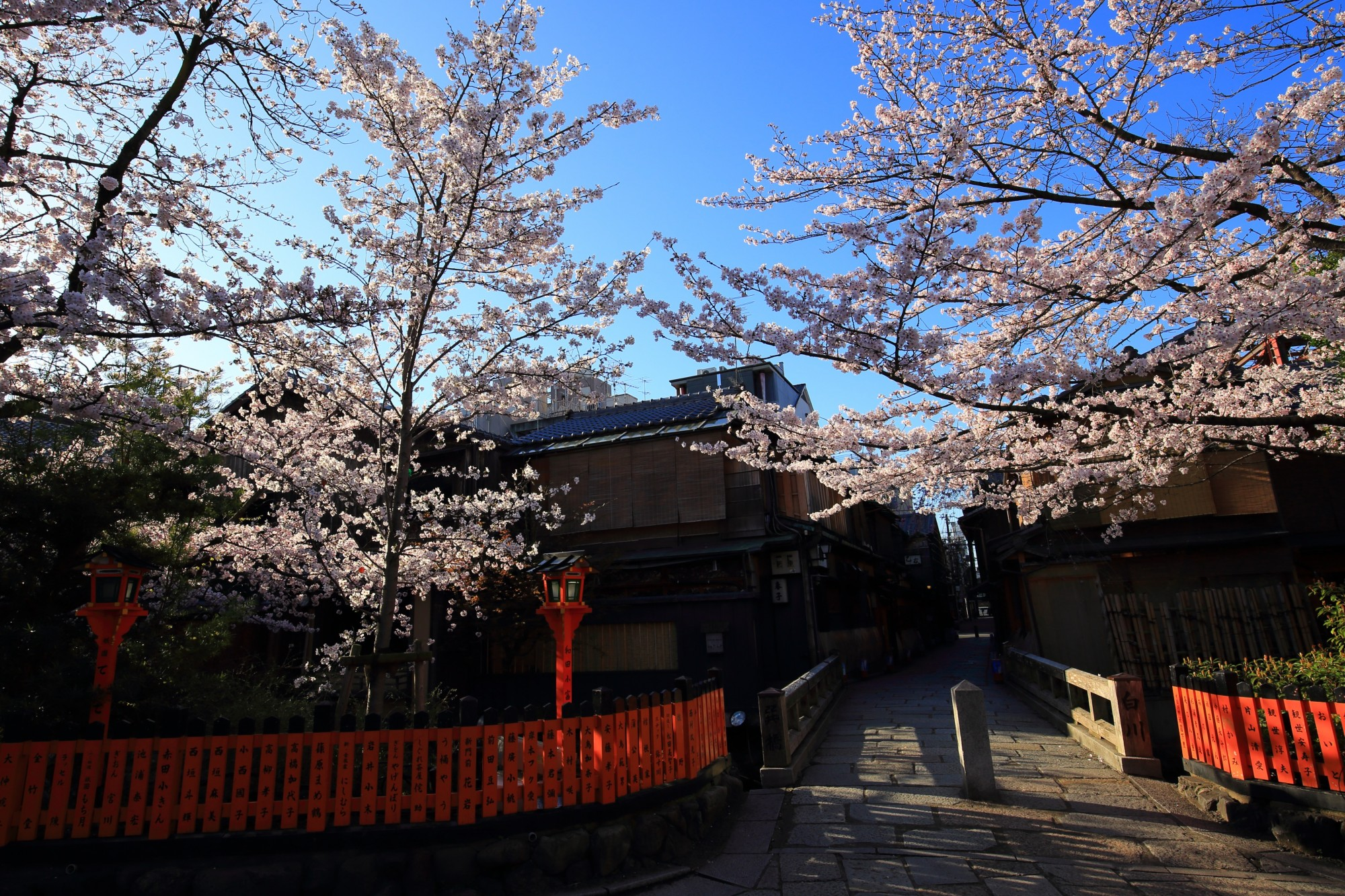 古風な街並みと咲き誇る華やかな桜
