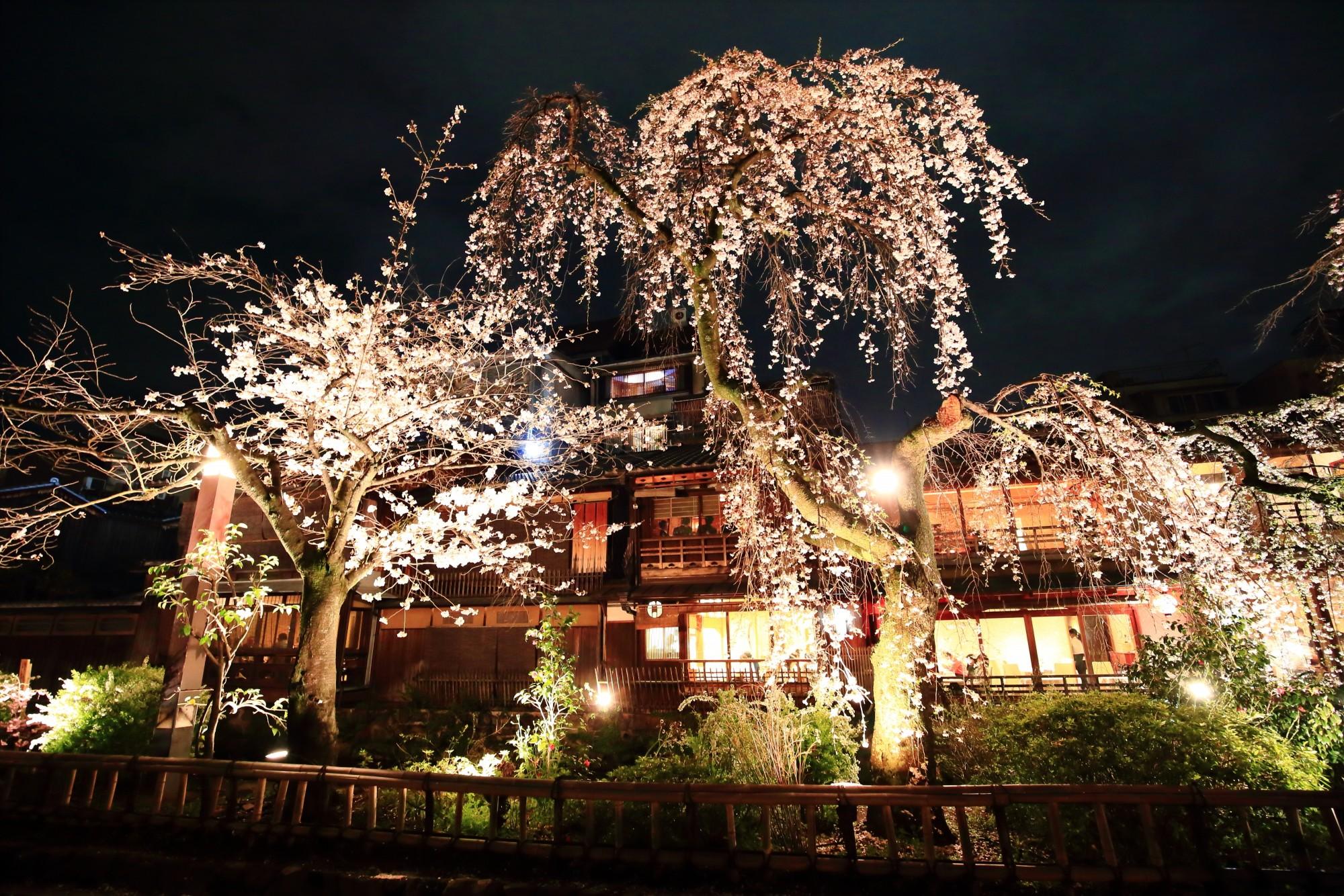 祇園白川の桜ライトアップ