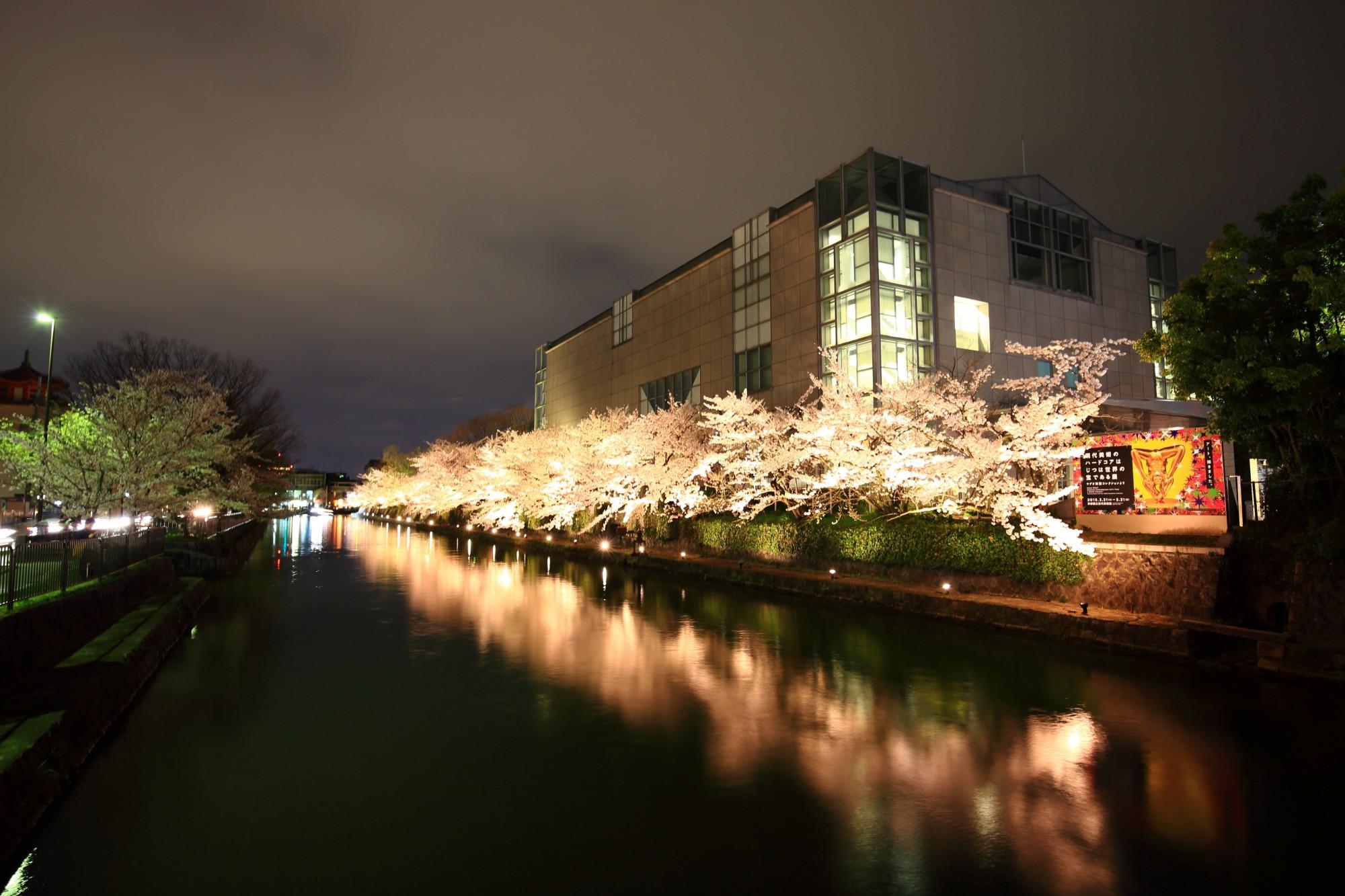水辺の夜桜と水鏡
