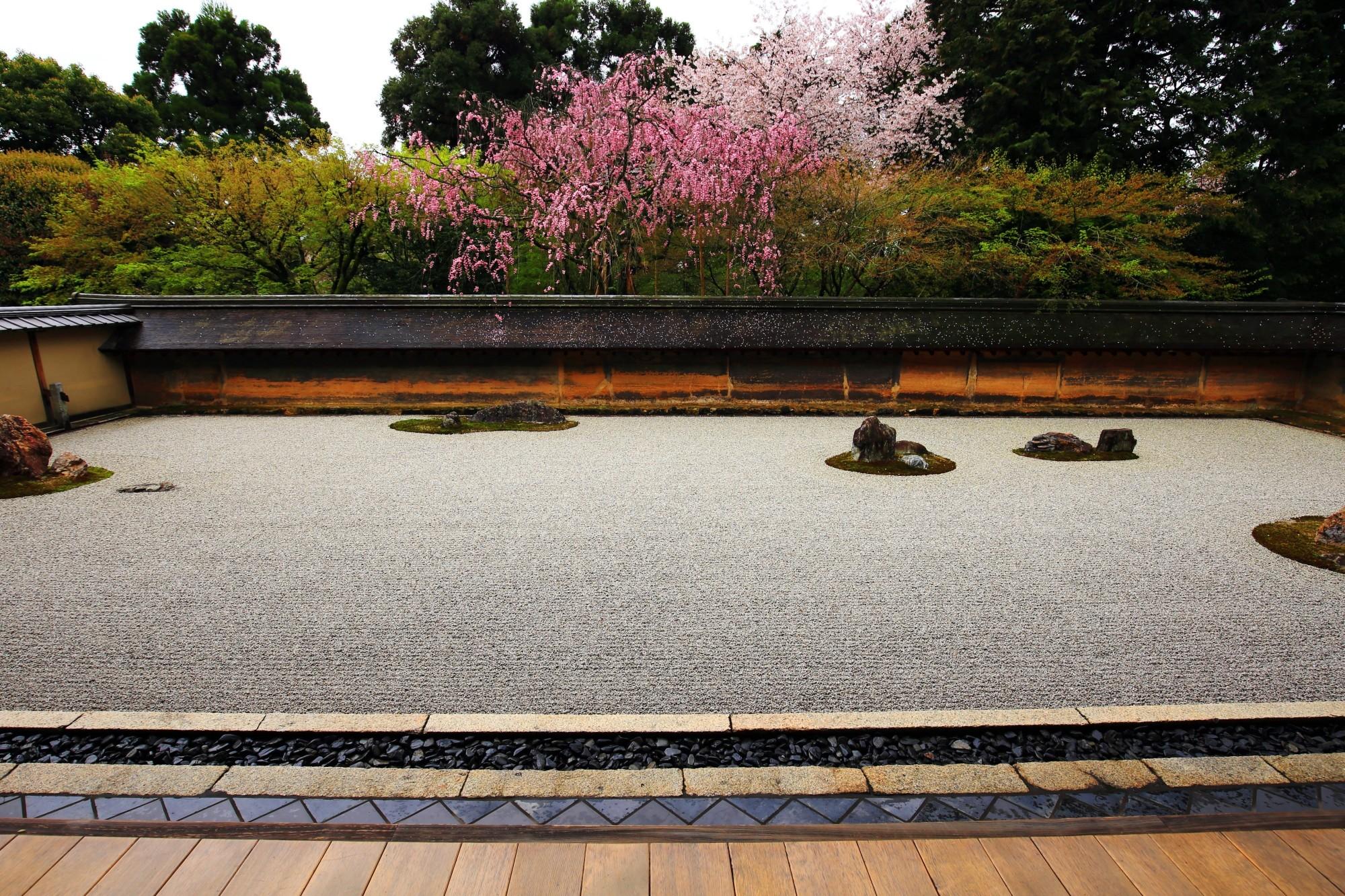 石庭のしだれ桜と雨の散り桜