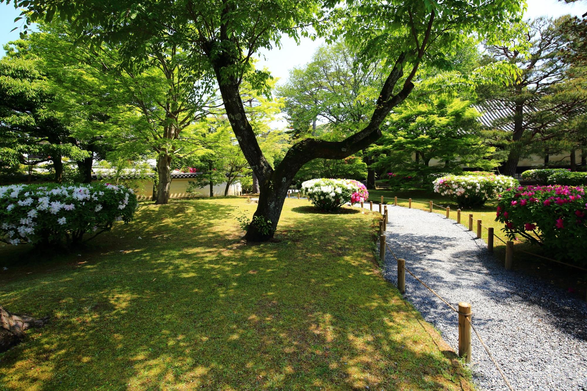 ツツジも咲き出している平等院の庭園