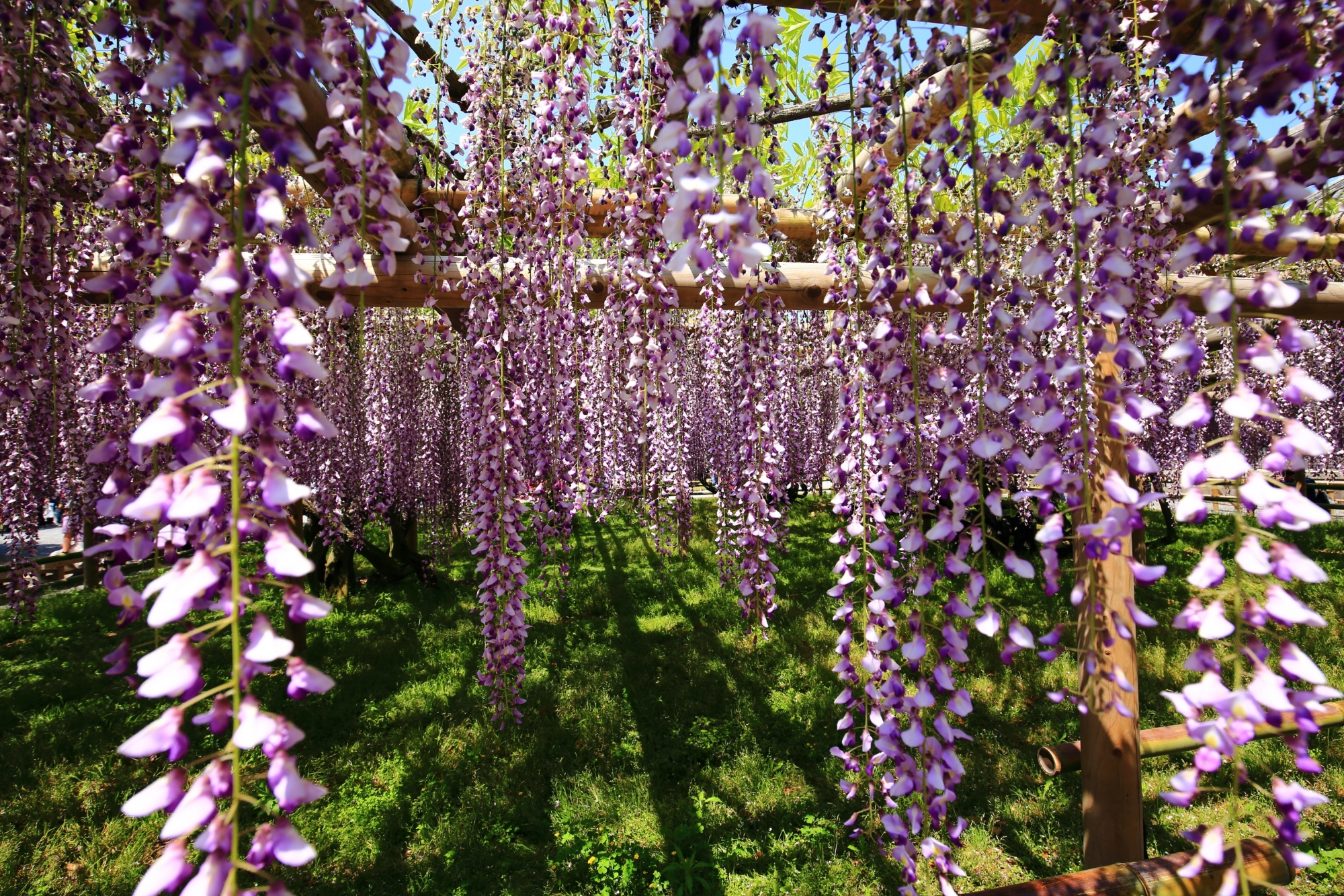 春風に優雅にそよぐ綺麗な花