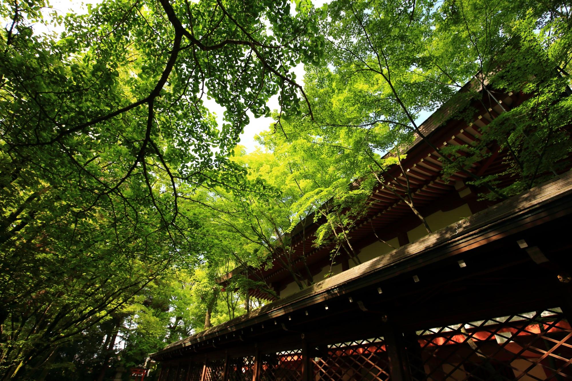 上御霊神社の本殿周りの鮮やかな新緑