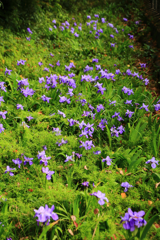 緑の上で優雅に咲く薄紫の一初