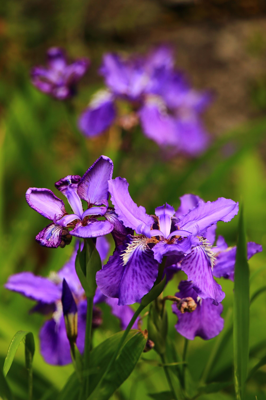 複雑で繊細な造りの一初の花