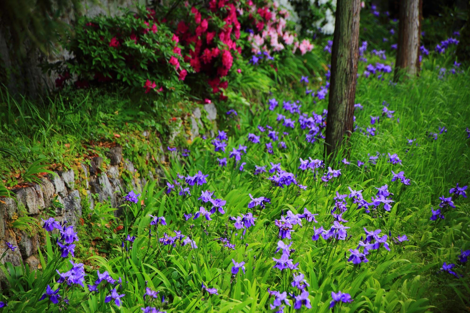 上御霊神社の素晴らしい一初(いちはつ)と春の彩り