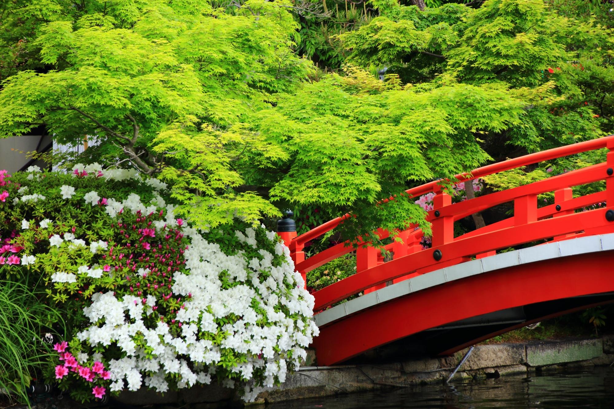法成橋と新緑と爽やかな白いツツジ
