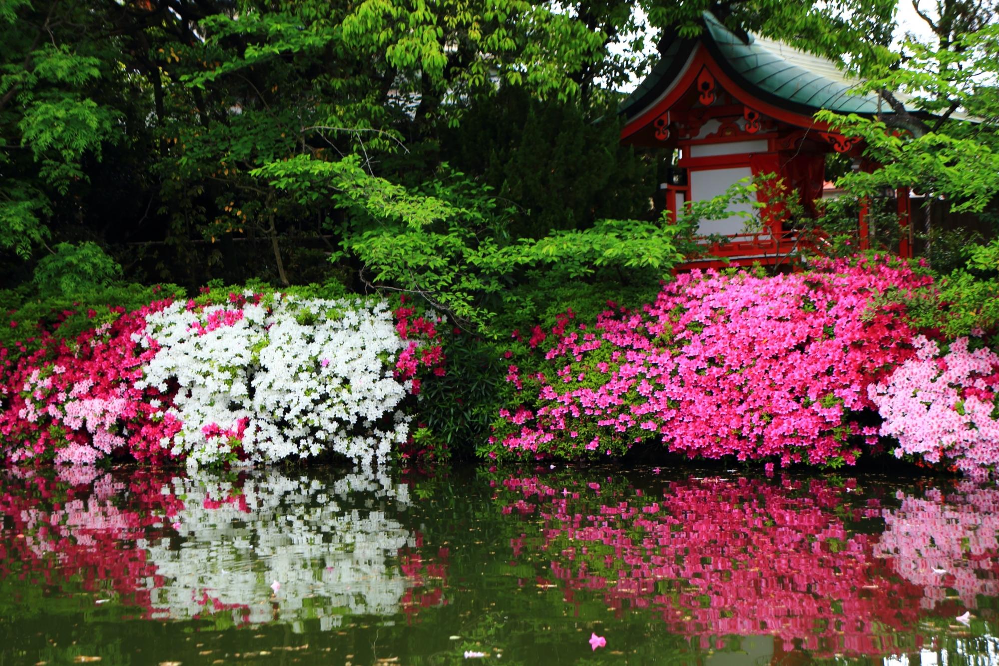 水辺で咲き誇る爽やかな白や鮮やかな紫の様々な色のツツジ