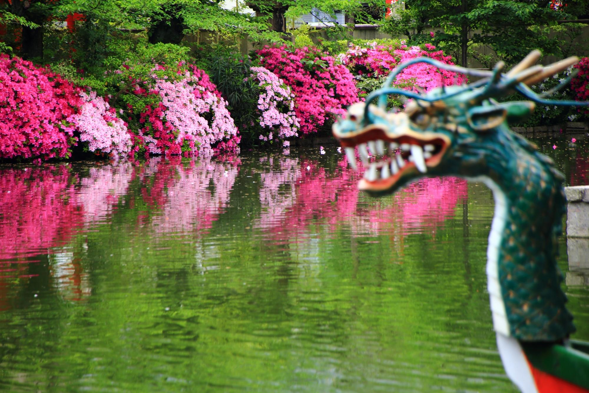 春の神泉苑の絵になるツツジの情景