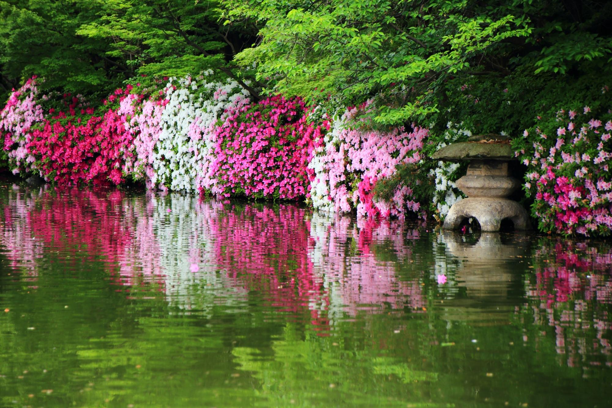 池中にある蟷螂とツツジの神泉苑を代表するツツジの風景
