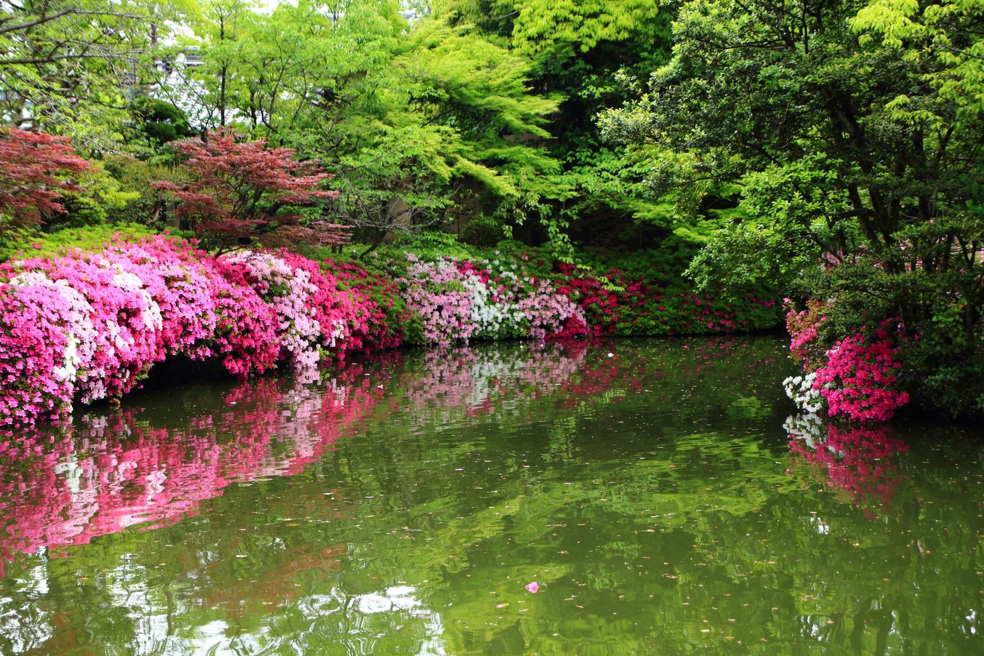 神泉苑の主に北側のツツジの風景
