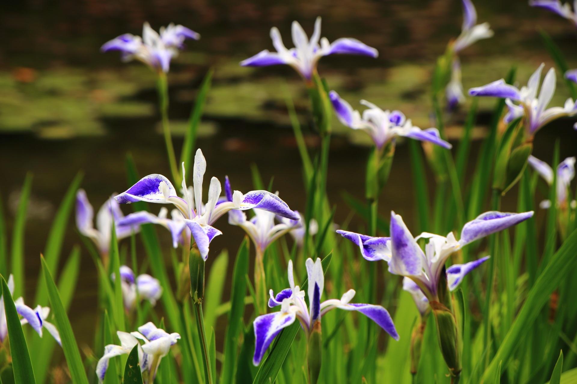 楽しく華やかな雰囲気が漂う平安神宮の折鶴