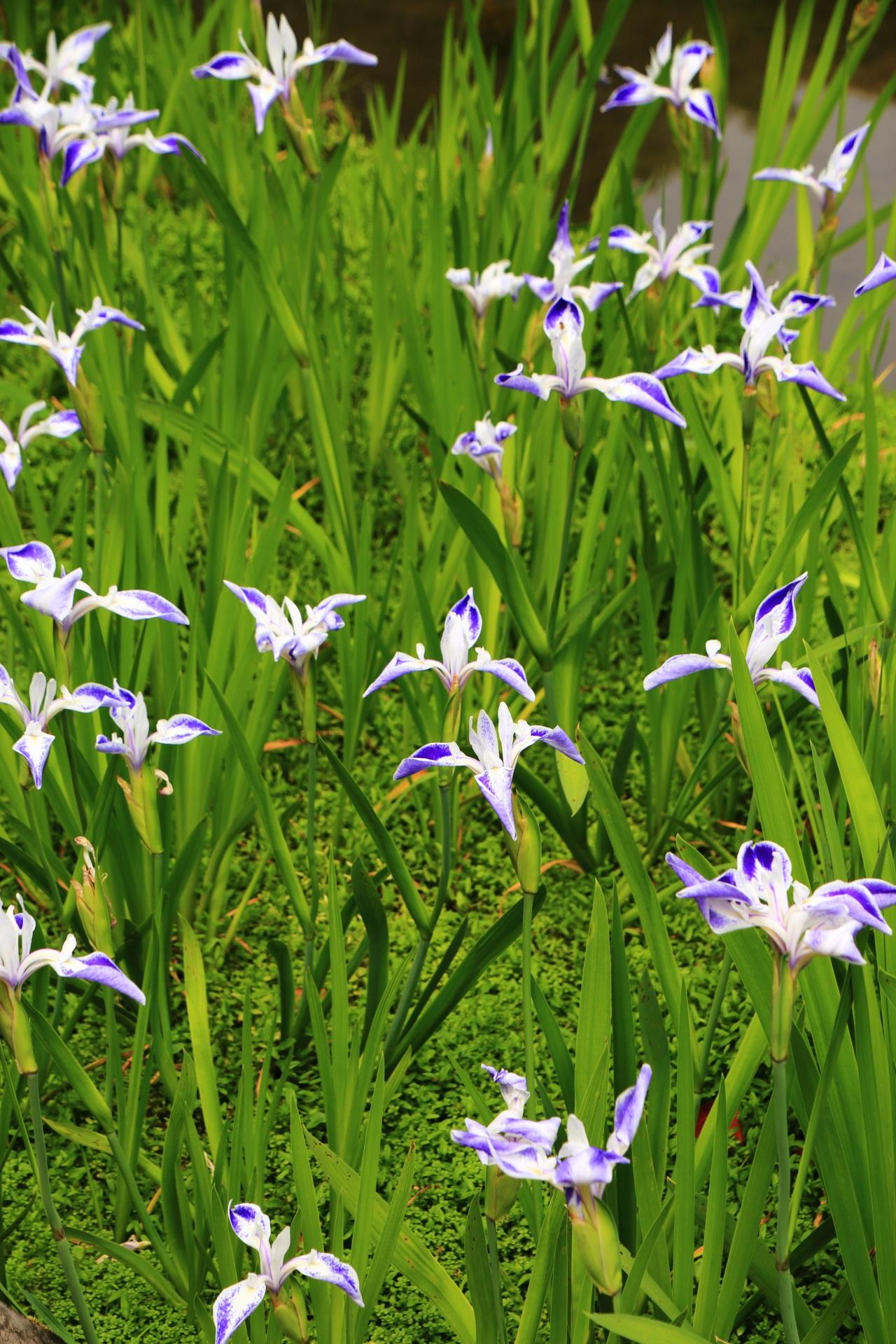 緑の上で踊るような楽しい折鶴の花