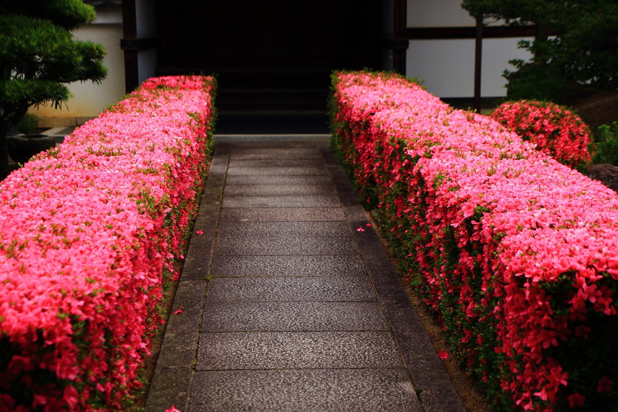 凄すぎるピンクの生垣の参道