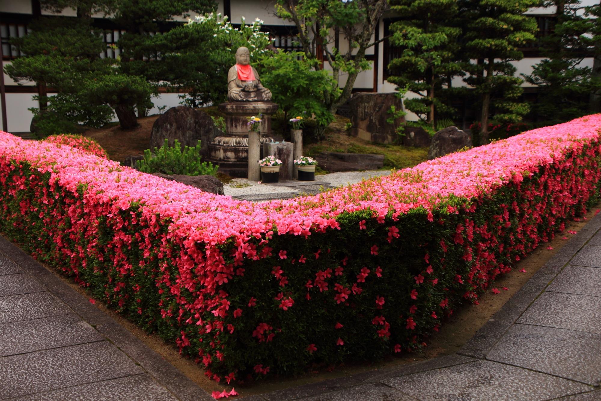 満開のピンクのサツキにつつまれる春の妙心寺の慈雲院(じうんいん)
