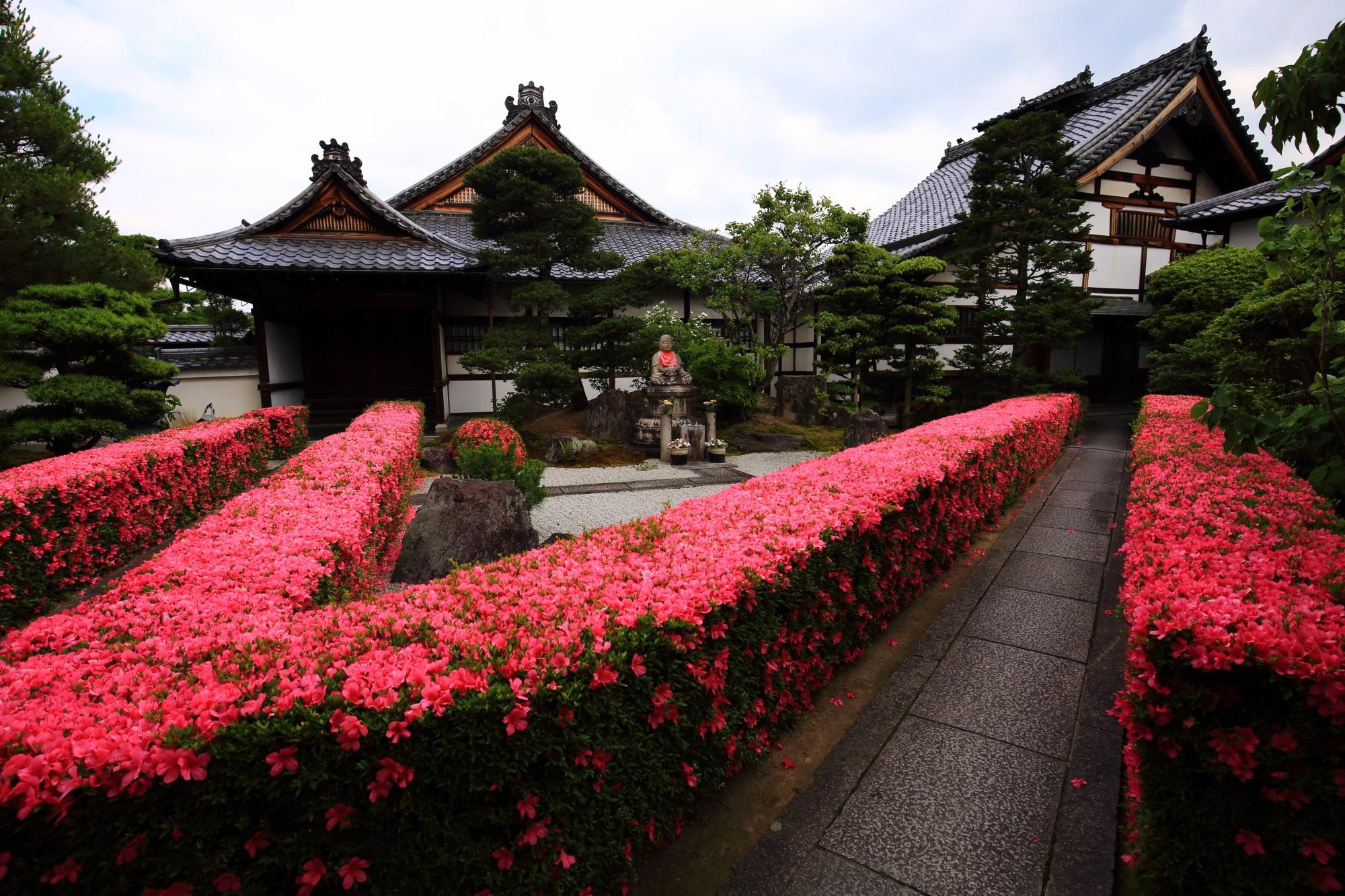 参道沿いの圧巻のピンクの皐月の生垣