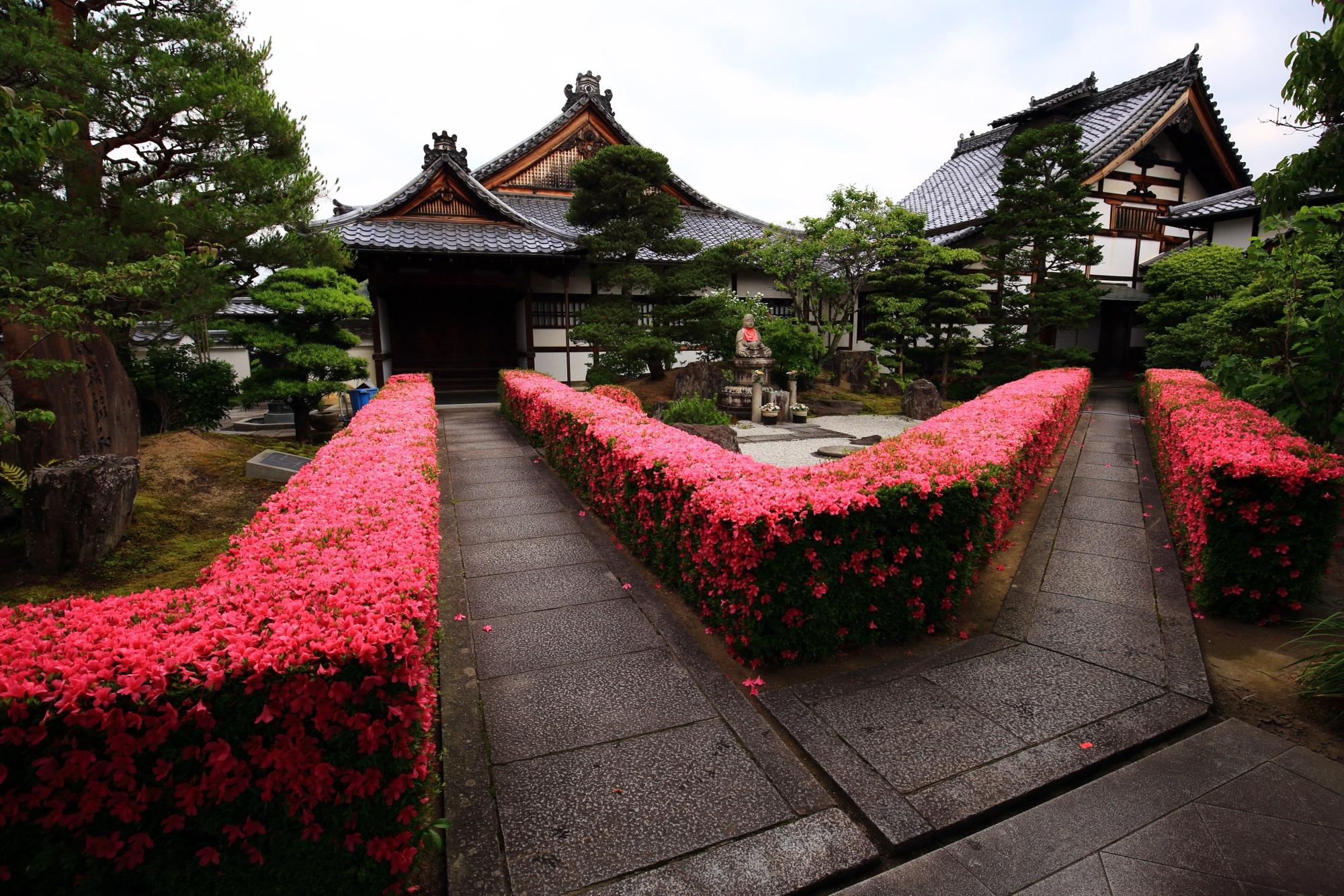 妙心寺 慈雲院 さつき ピンクに彩られる圧巻の生垣