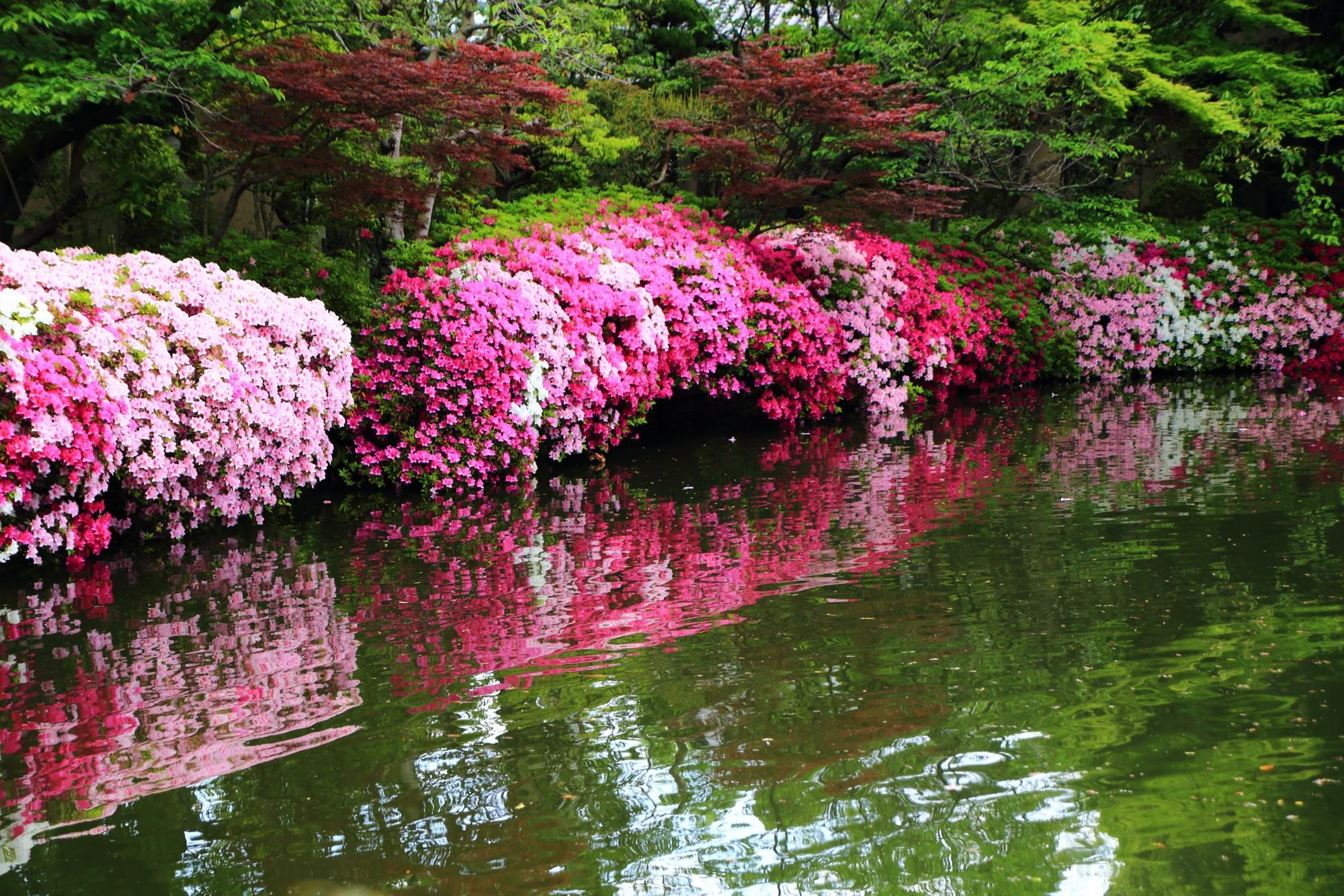神泉苑 つつじ 極上の水辺の彩りと美しすぎる水鏡