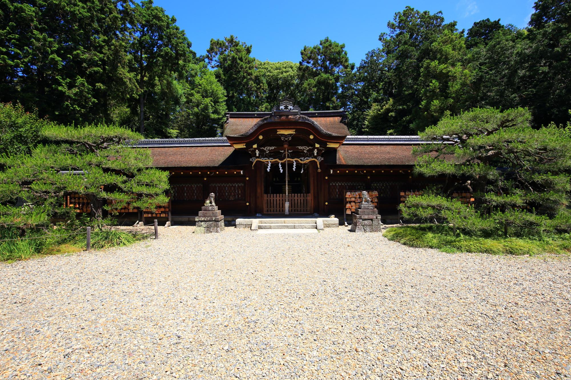 両脇には松が植えらており前は砂庭のようになっている梅宮大社の本殿