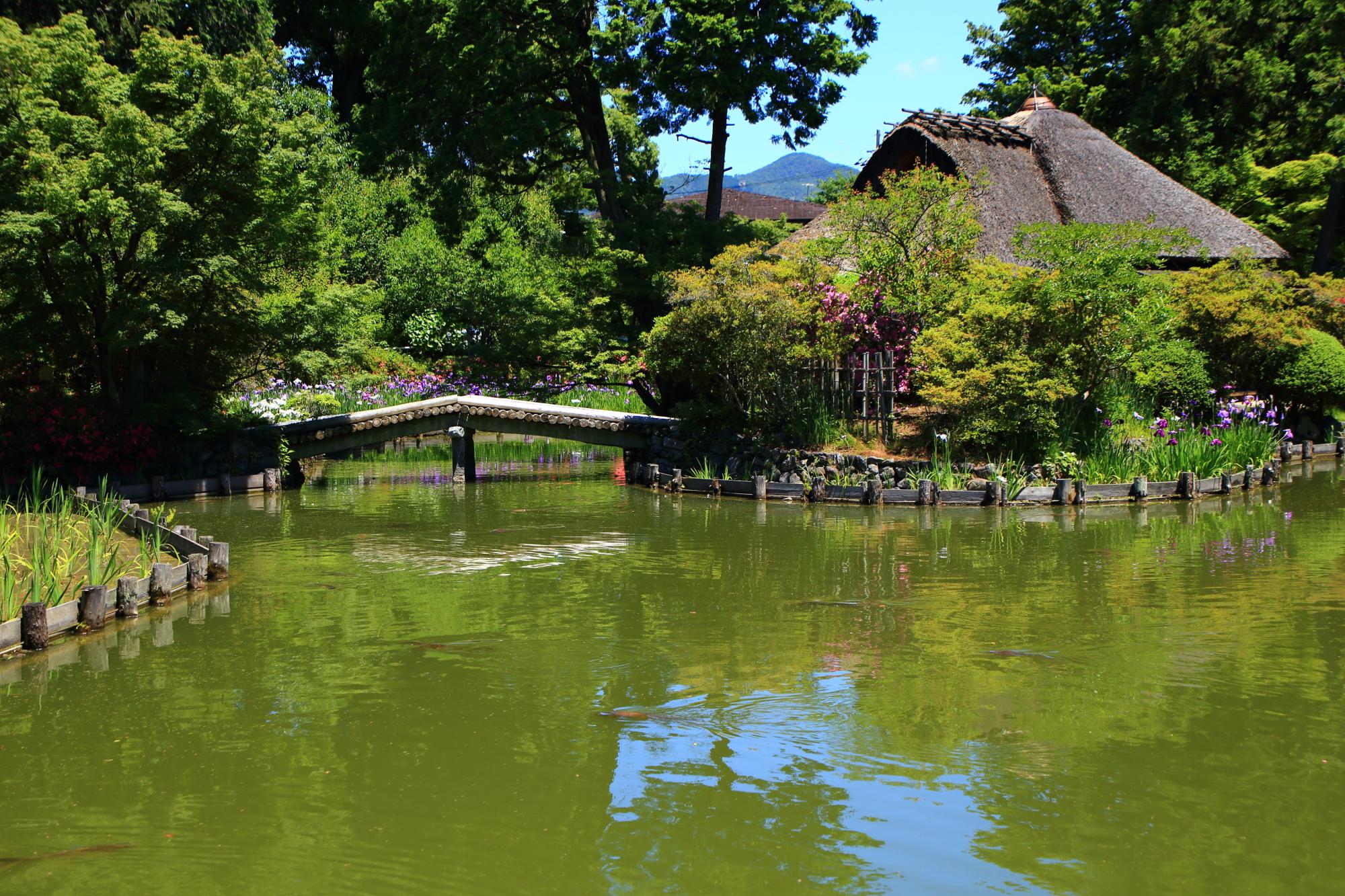 周囲は花菖蒲に囲まれた梅宮大社の東神苑の咲耶池(さくやいけ)と池中亭