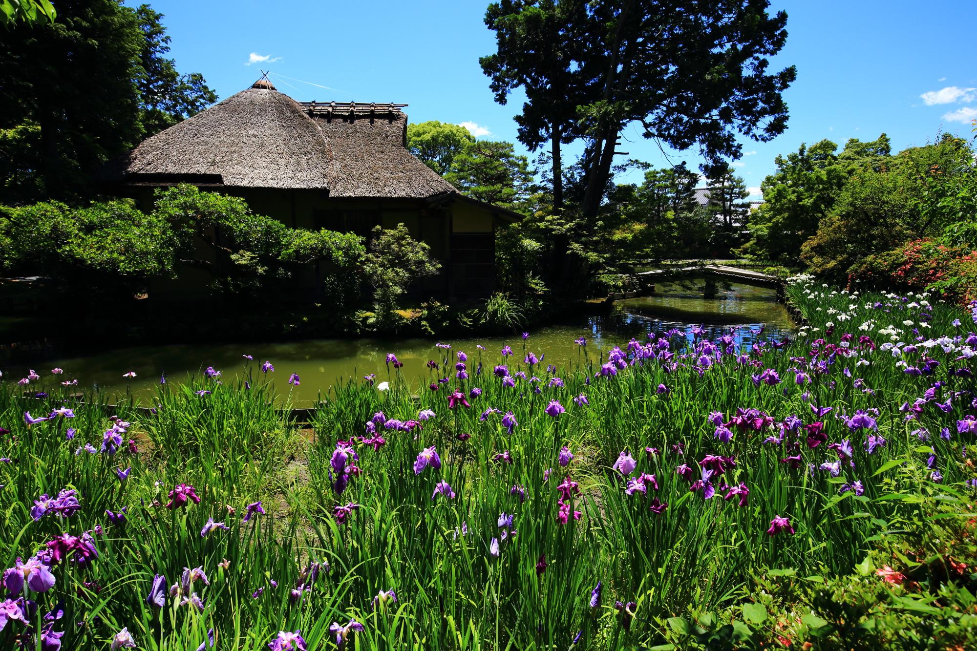 華やかさの中にも風情が感じられる梅宮大社の池中亭と花菖蒲