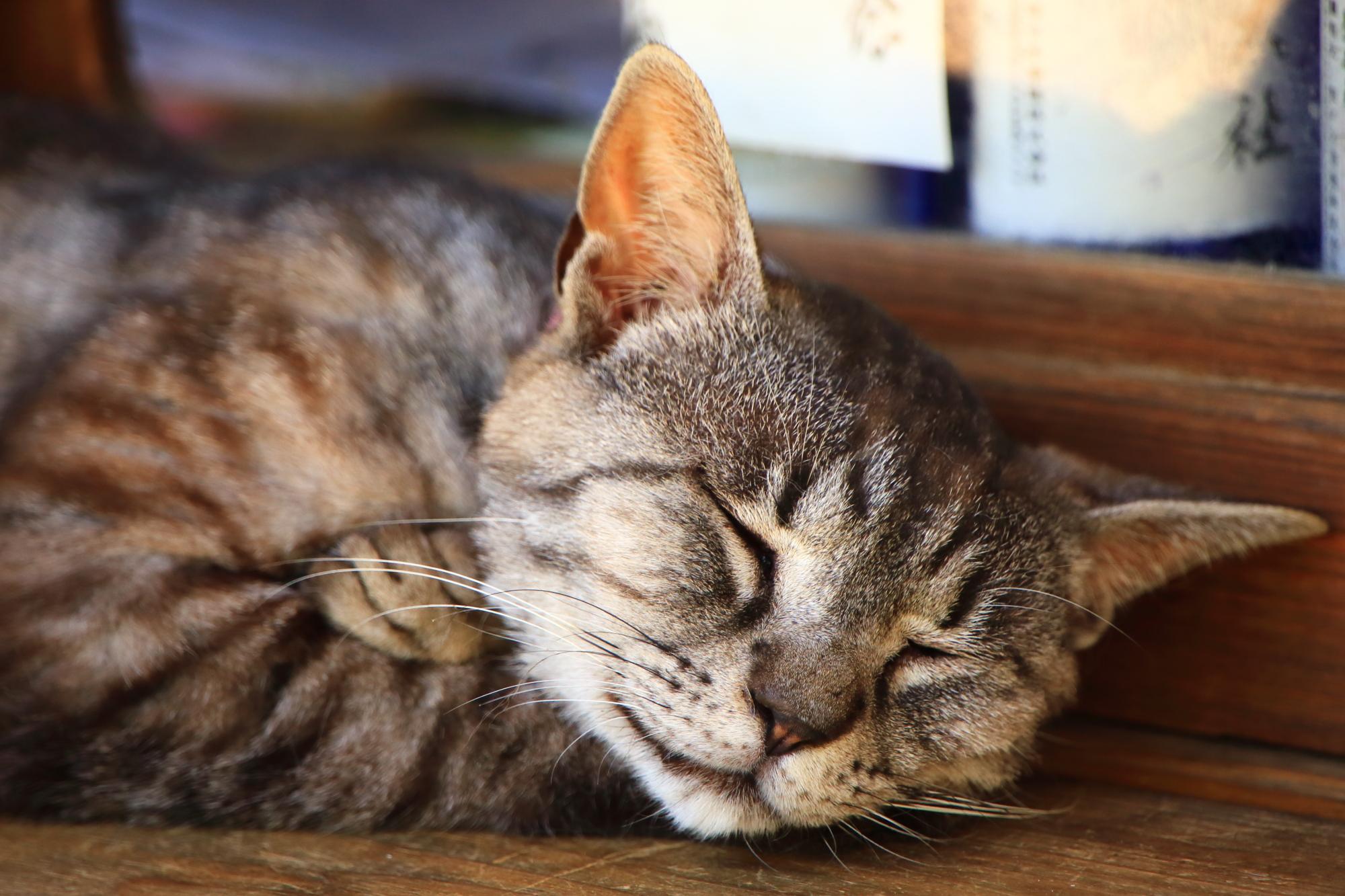 「猫神社」とも呼ばれる梅宮大社の気持ち良さそうにお休みする猫