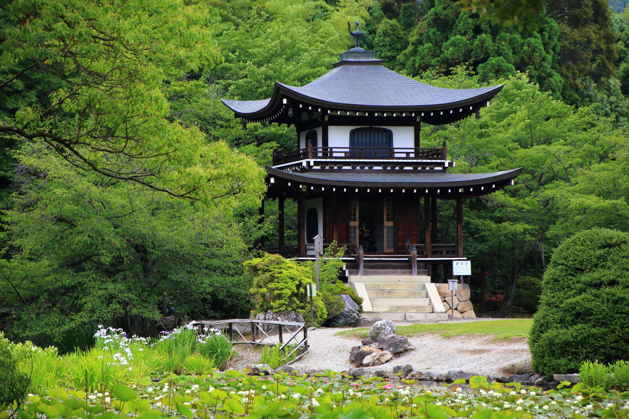 背景は深い緑につつまれた勧修寺の観音堂と氷室池の睡蓮と花菖蒲