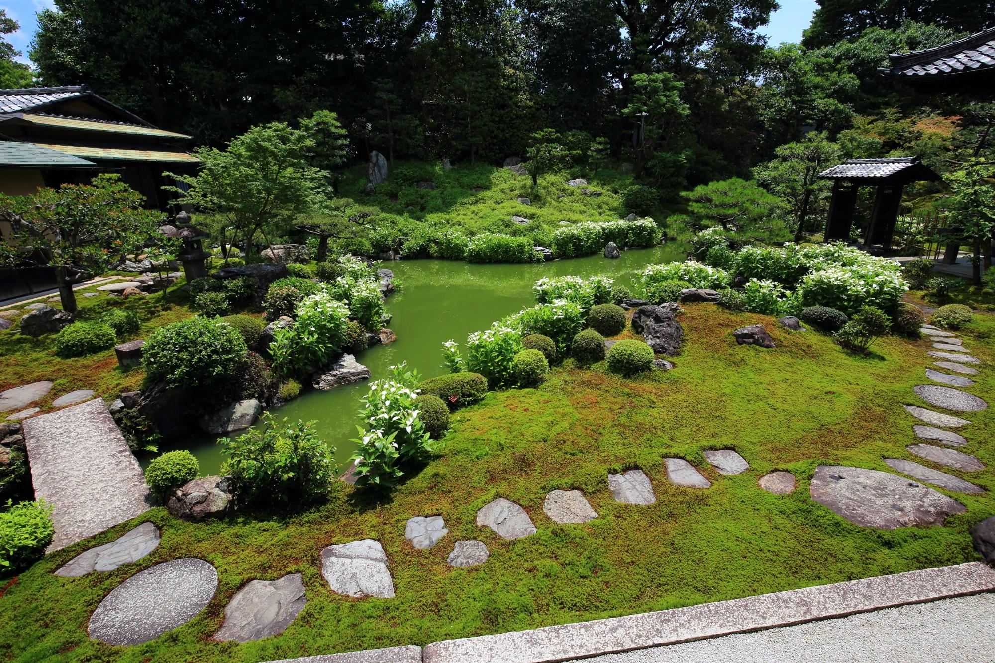 建仁寺両足院の素晴らしい半夏生と初夏の庭園の彩り