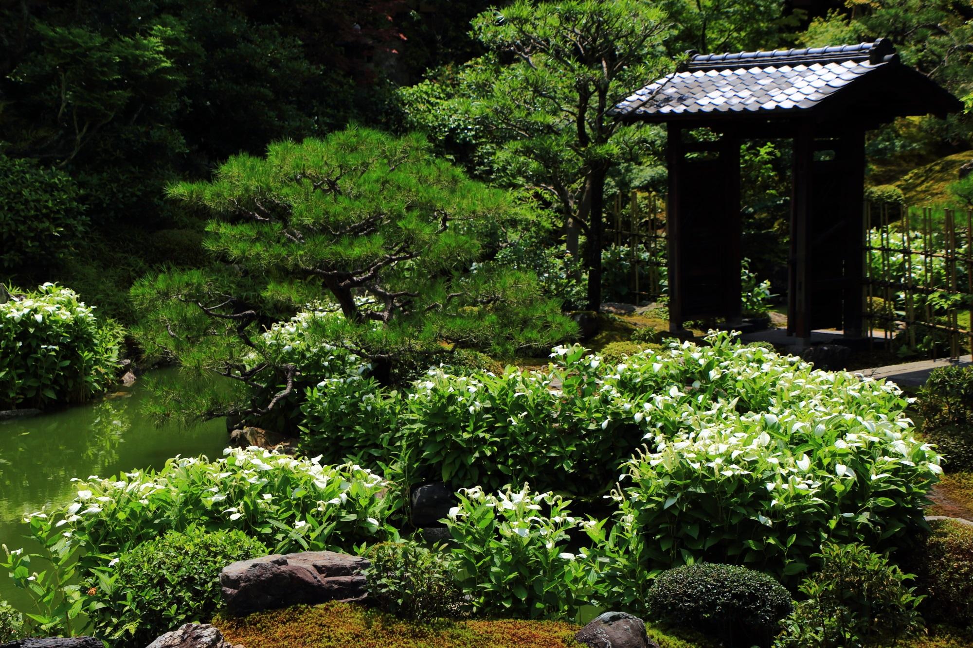 両足院の庭園に面白みをそえる佇む門