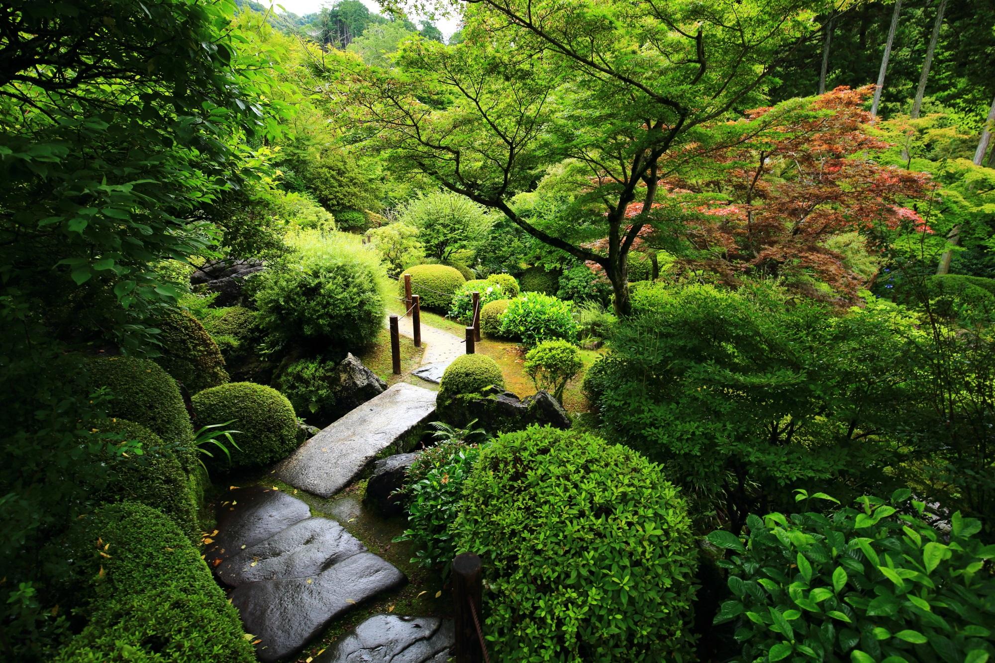 三室戸寺の多種多様な緑につつまれる池泉式庭園