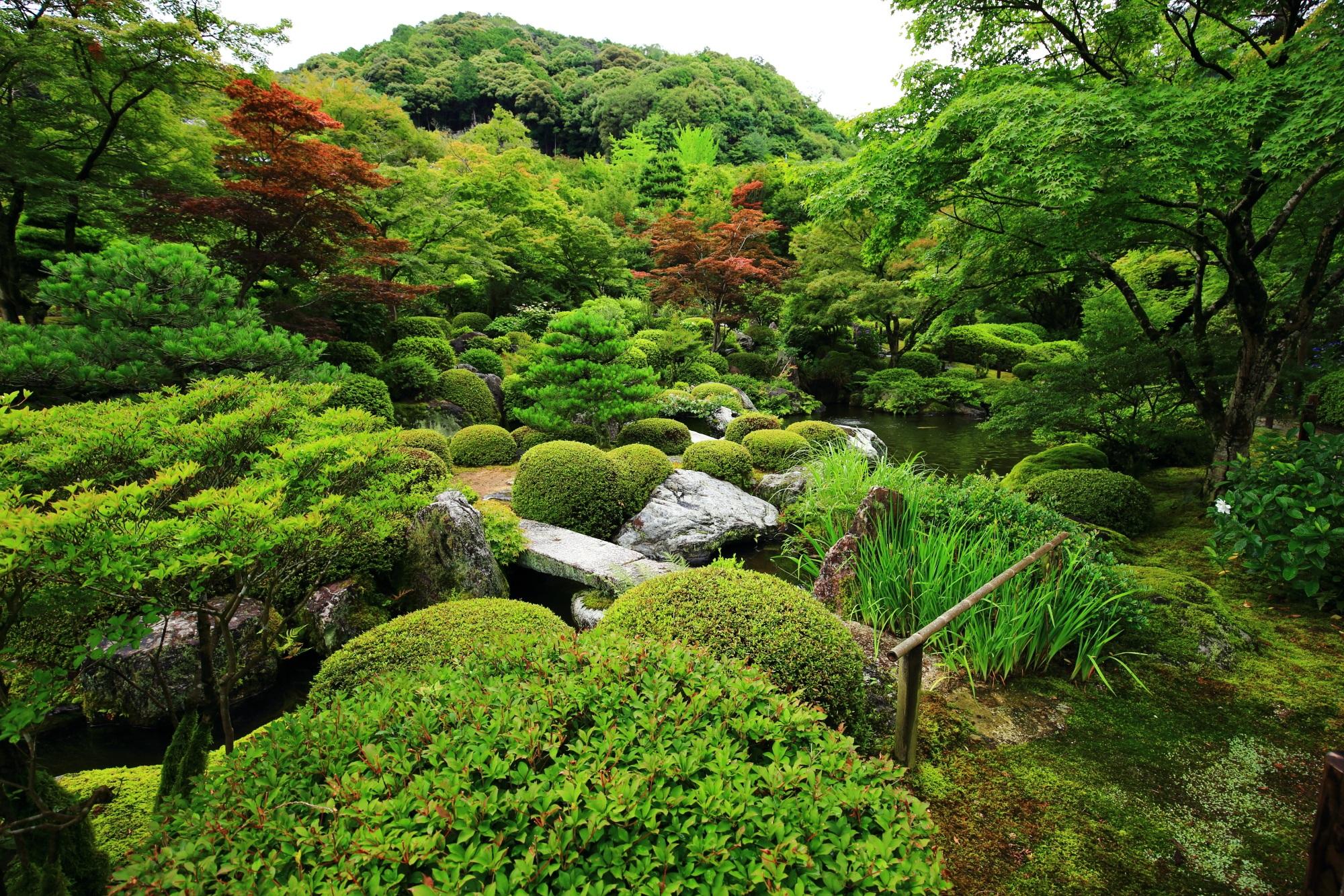 三室戸寺の美しい見事な池泉式庭園