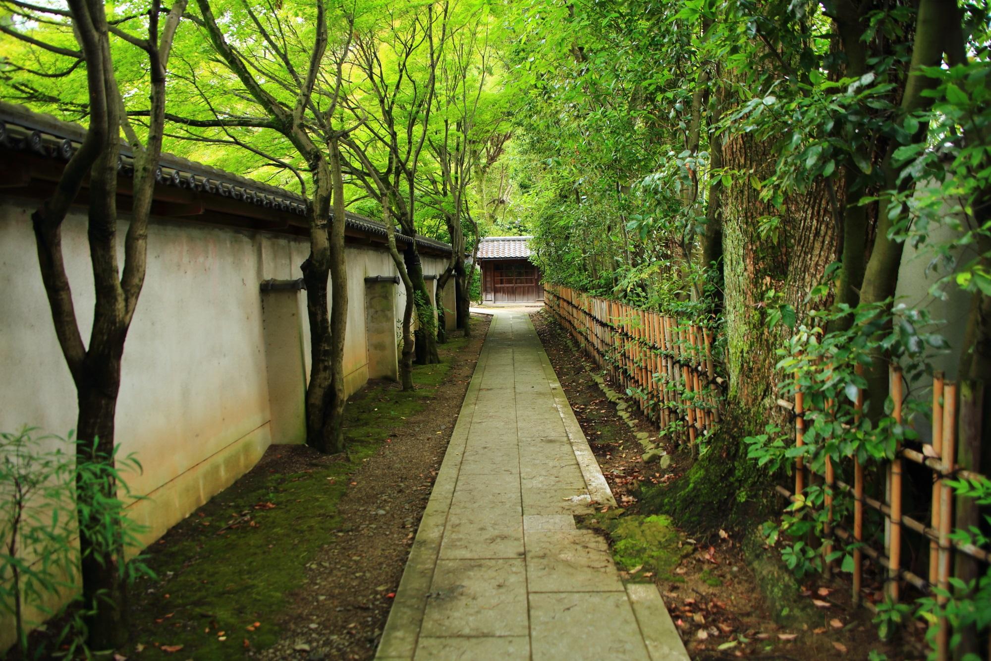 廬山寺の源氏庭裏の緑溢れる参道