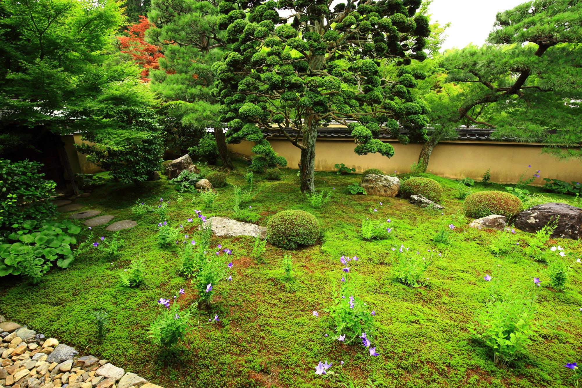天得院の多種多様な木々や植物につつまれた緑の庭園