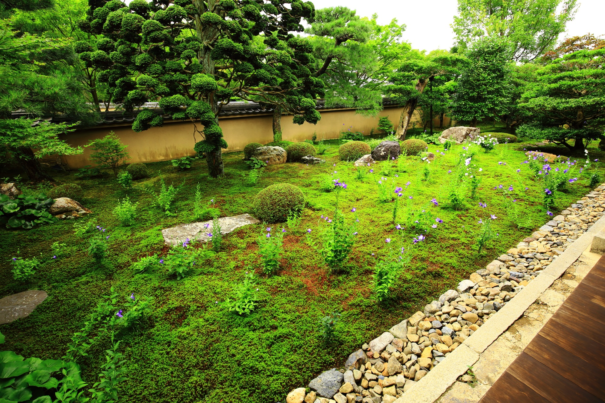 美しい緑と花の彩りにつつまれる7月の天得院