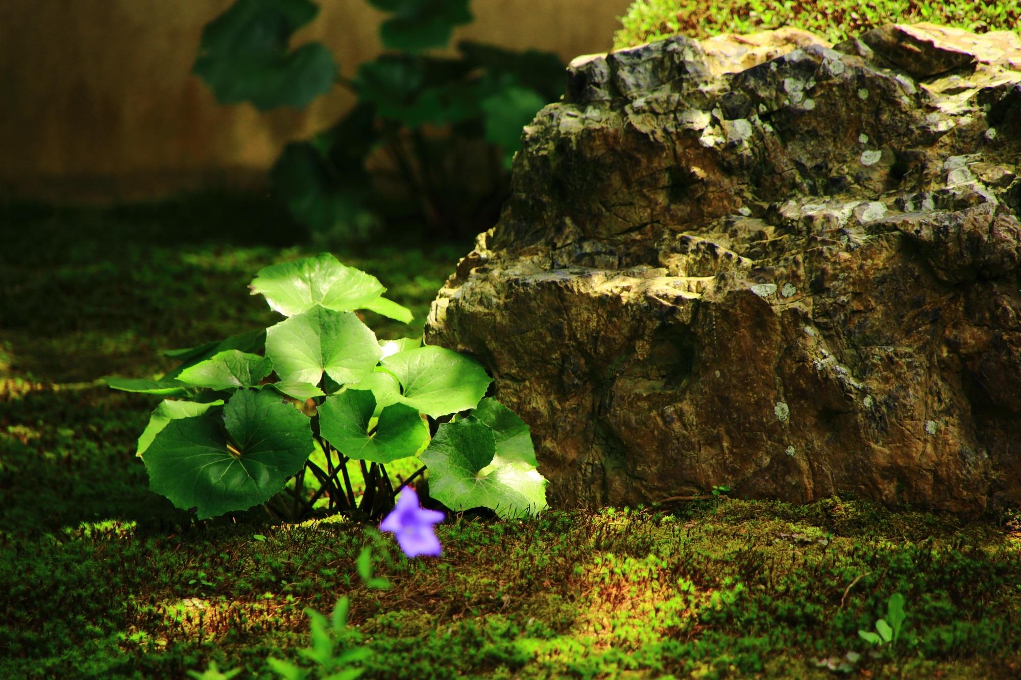 天得院の緑の庭園を演出する光と影
