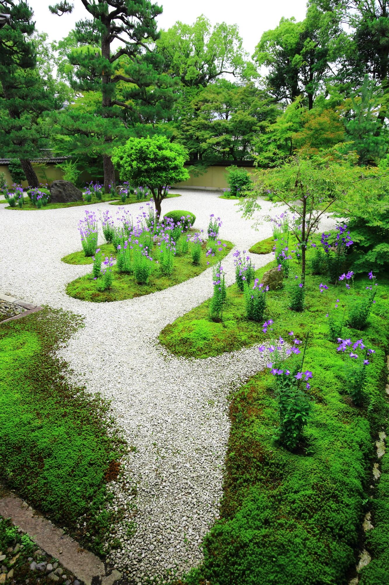 艶やかな紫と鮮やかな緑につつまれる見事な源氏庭