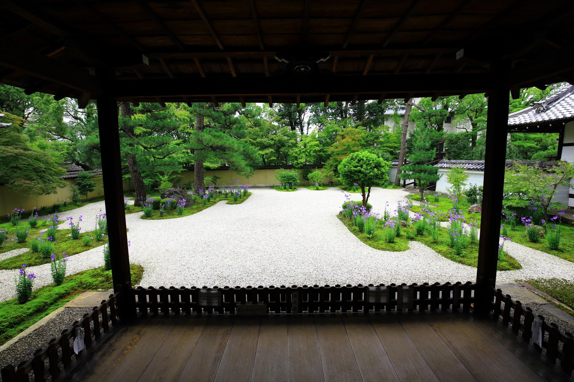 廬山寺の源氏庭の見ごろの桔梗(ききょう)と青もみじと苔