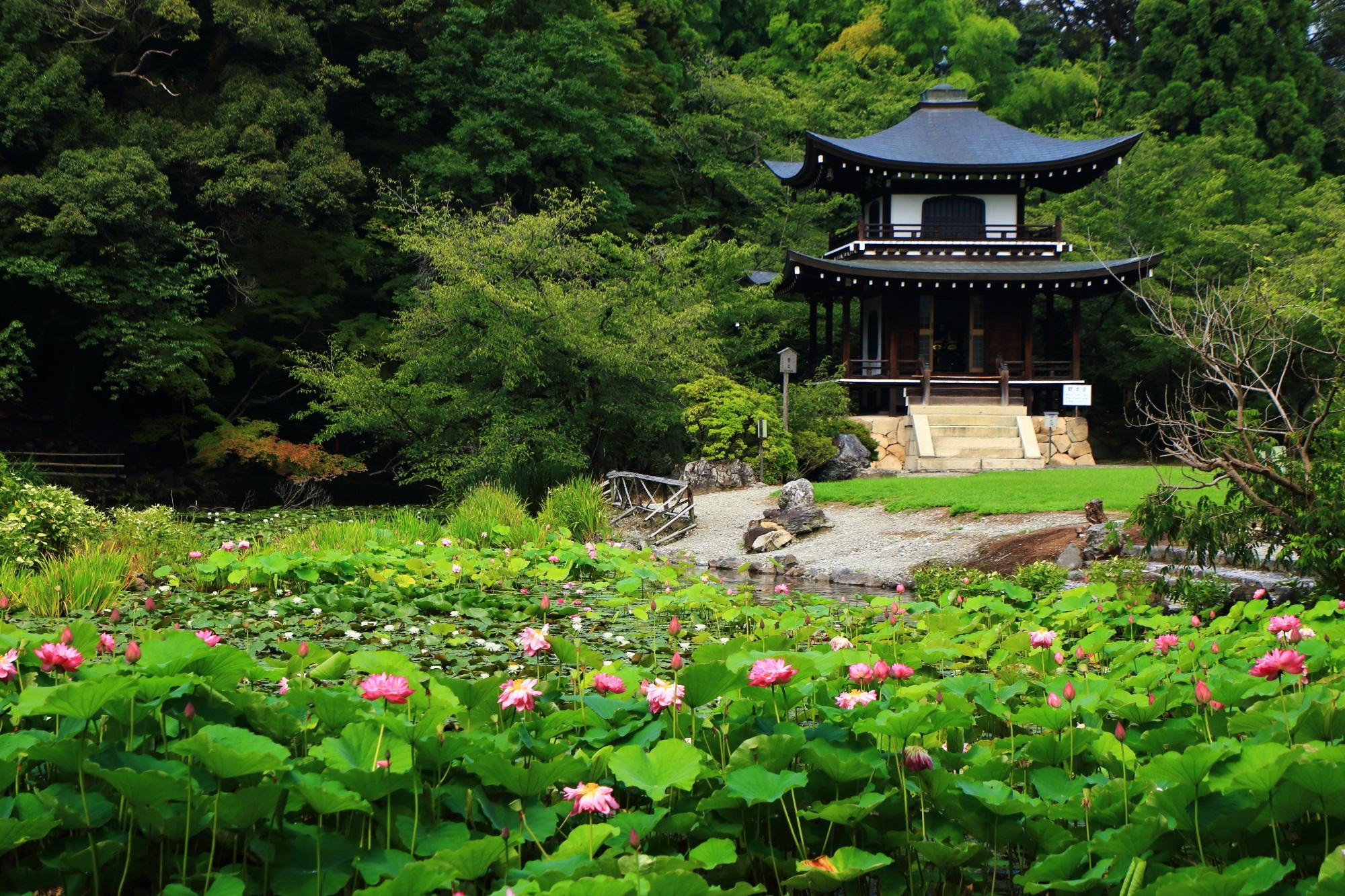 勧修寺の観音堂と蓮の絵になる夏の風景