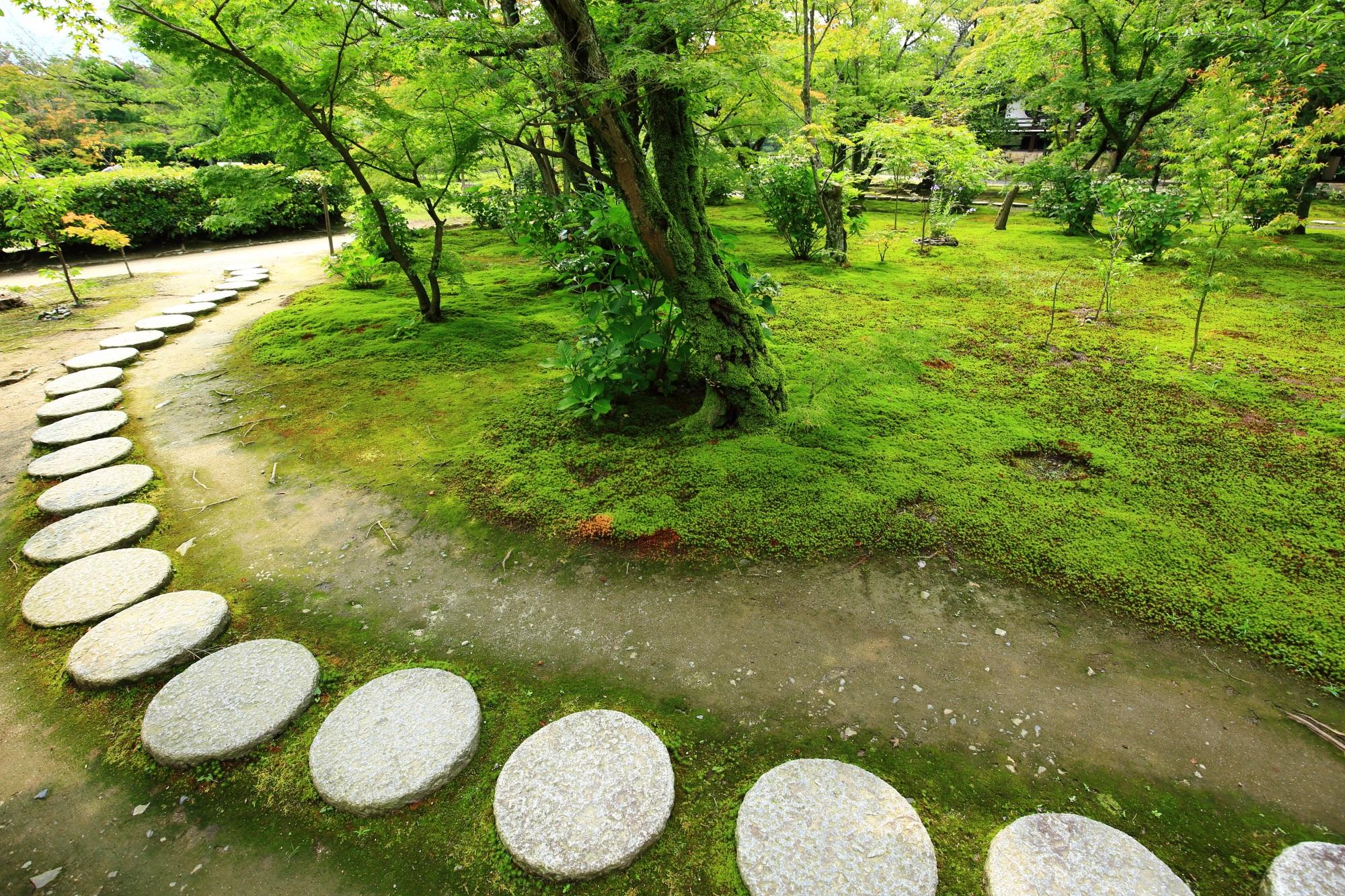 勧修寺の庭園の綺麗な鮮やかな緑の苔