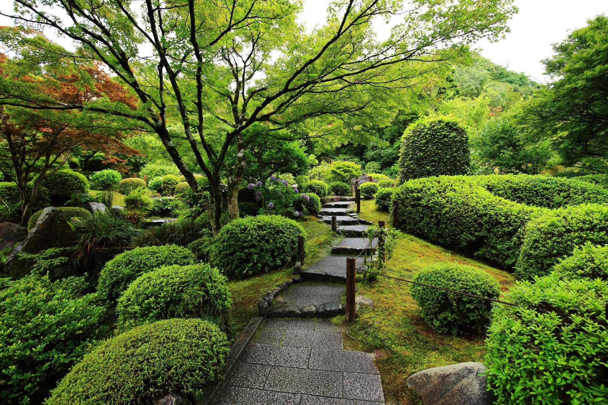 淡く優しい三室戸寺の刈り込みや苔の緑
