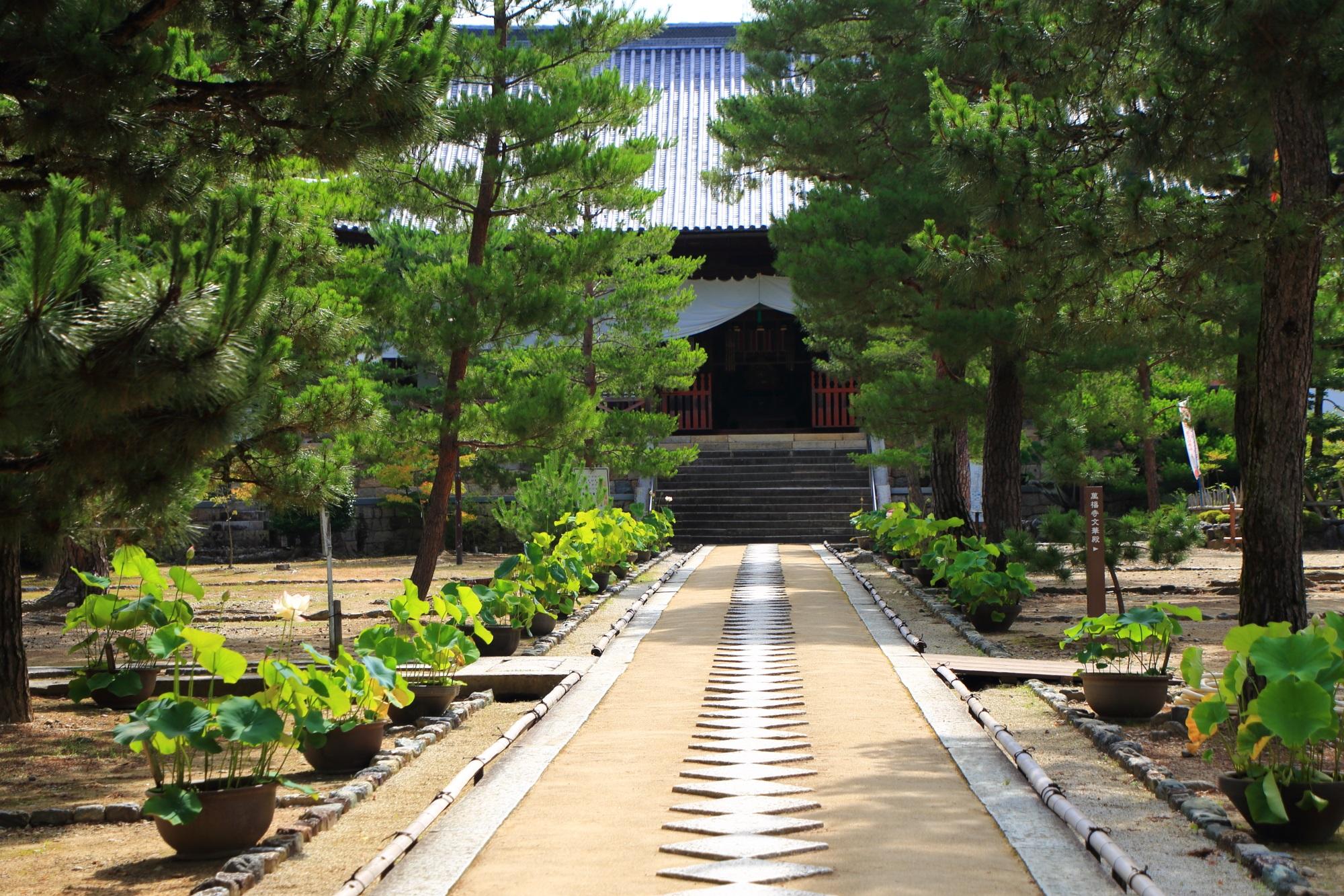 緑の木々に囲まれた萬福寺の天王殿と飛び石の参道