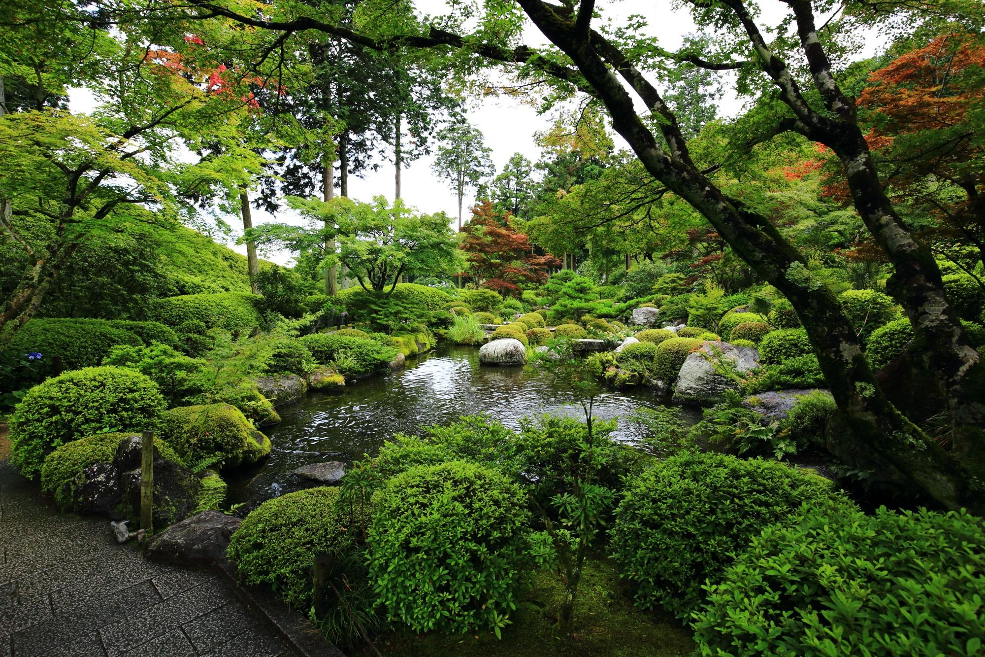 周囲をぐるっと回れる三室戸寺の回遊式の池泉式庭園