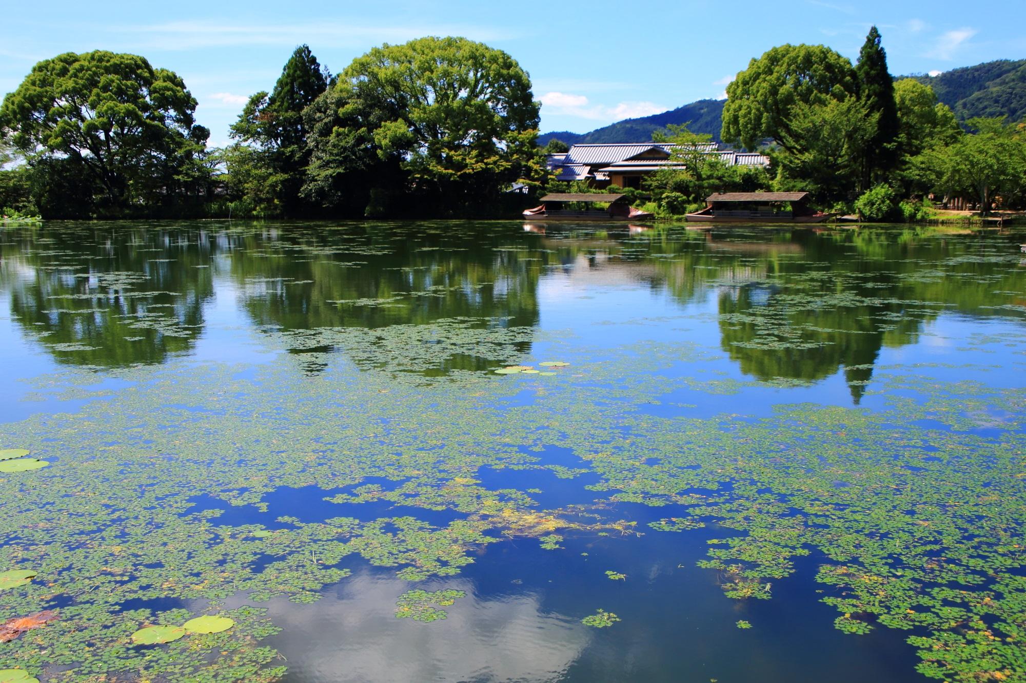 多種多様な木々や植物が育つ大覚寺の大沢池