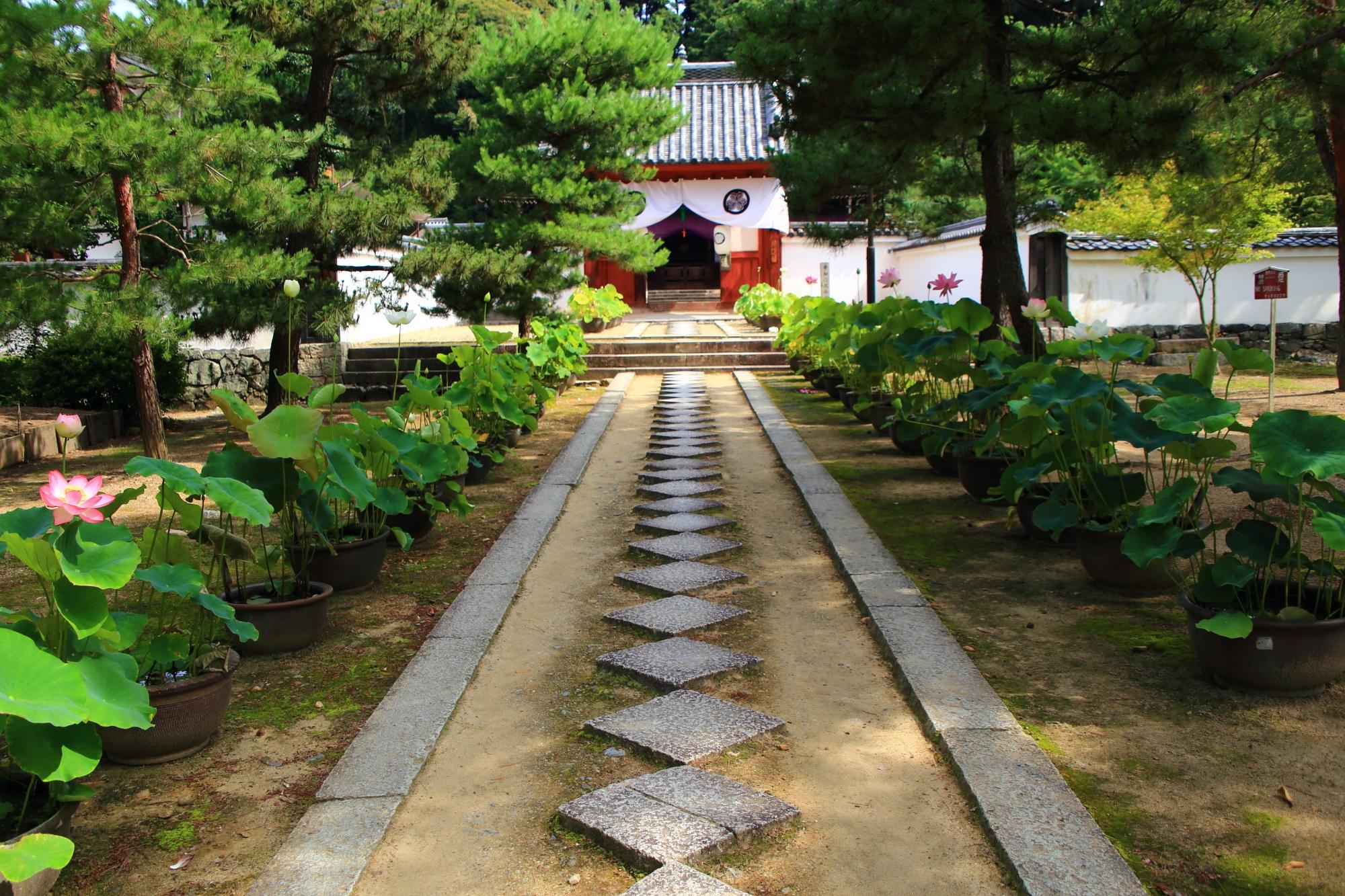 萬福寺の開山堂の朱色の門と飛び石の参道