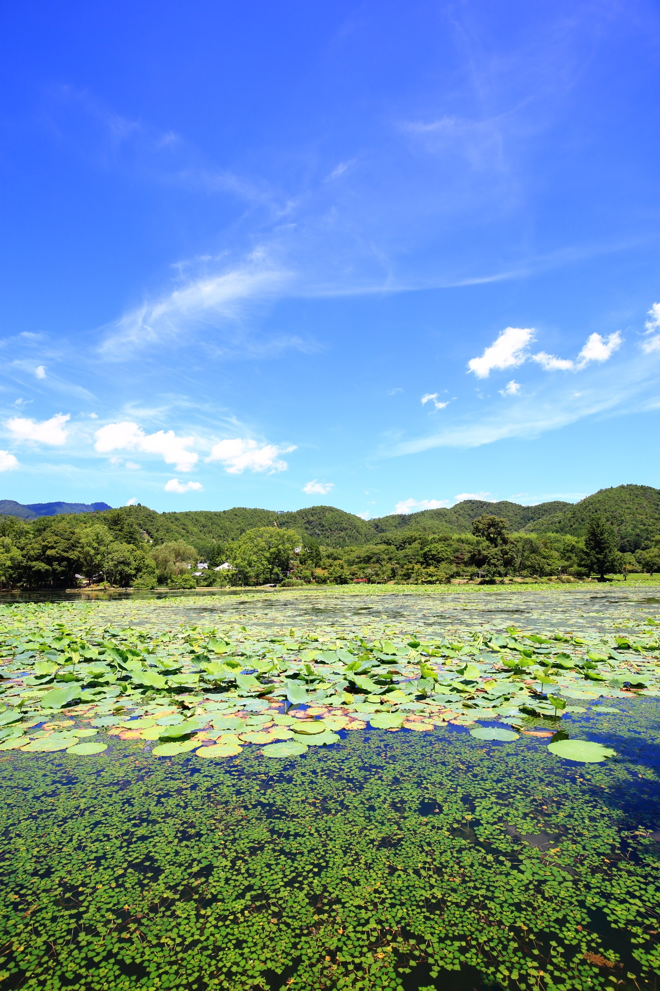 爽やかな青空と雲の下に広がる緑に覆われた大沢池
