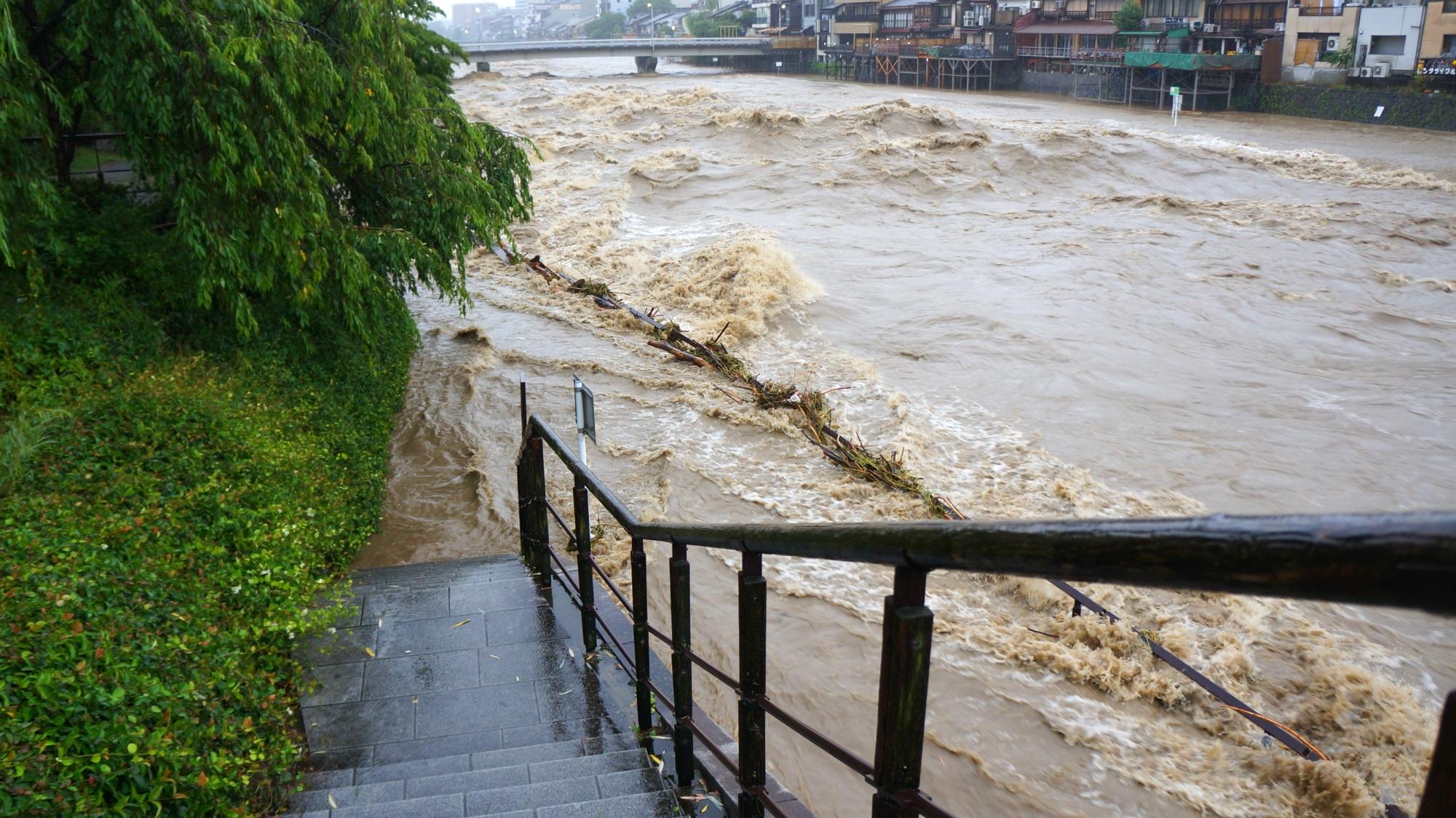 犬の散歩も出来ない増水した鴨川