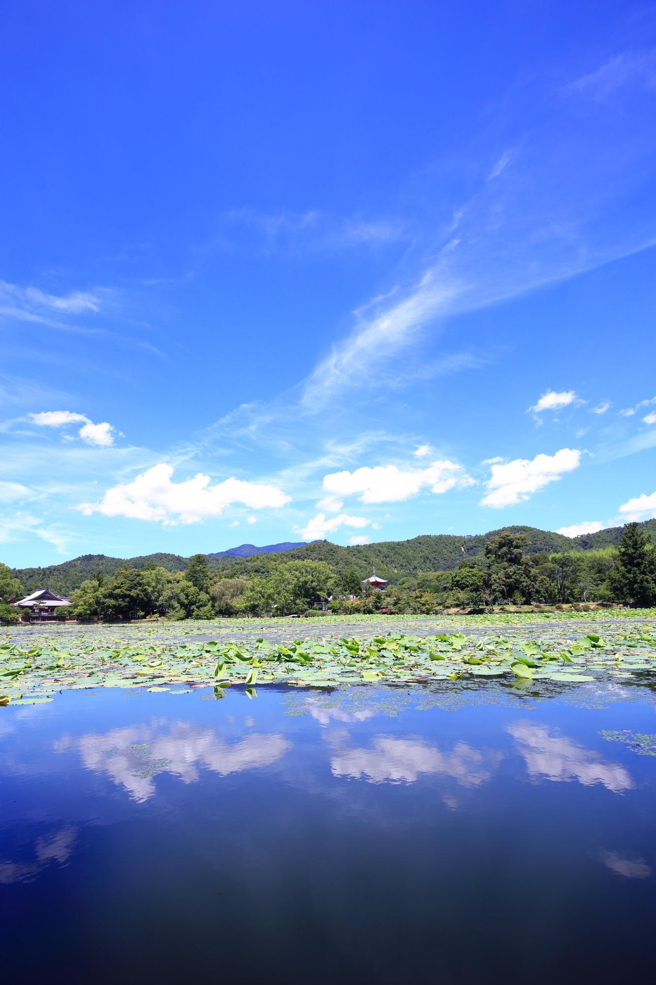 夏の大覚寺大沢池の極上の水鏡