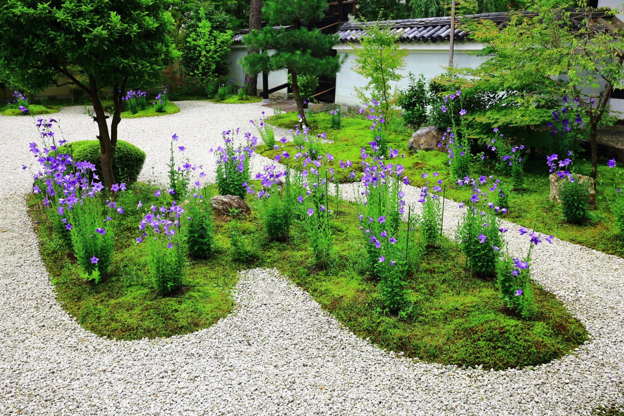 廬山寺の源氏庭の宇宙船っぽい苔