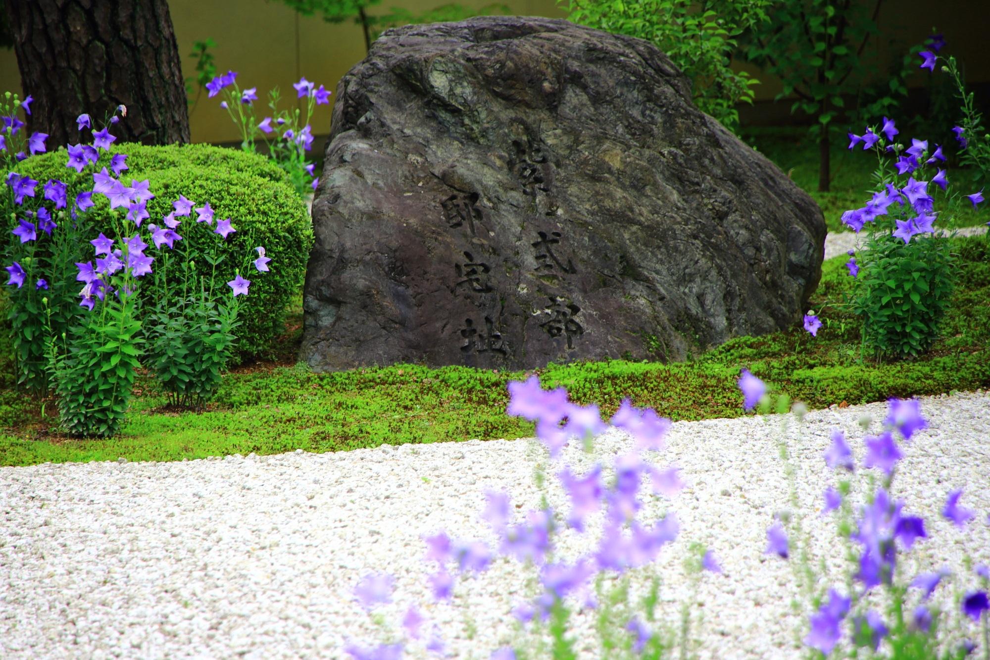 紫の桔梗の花を演出する白砂と緑の苔