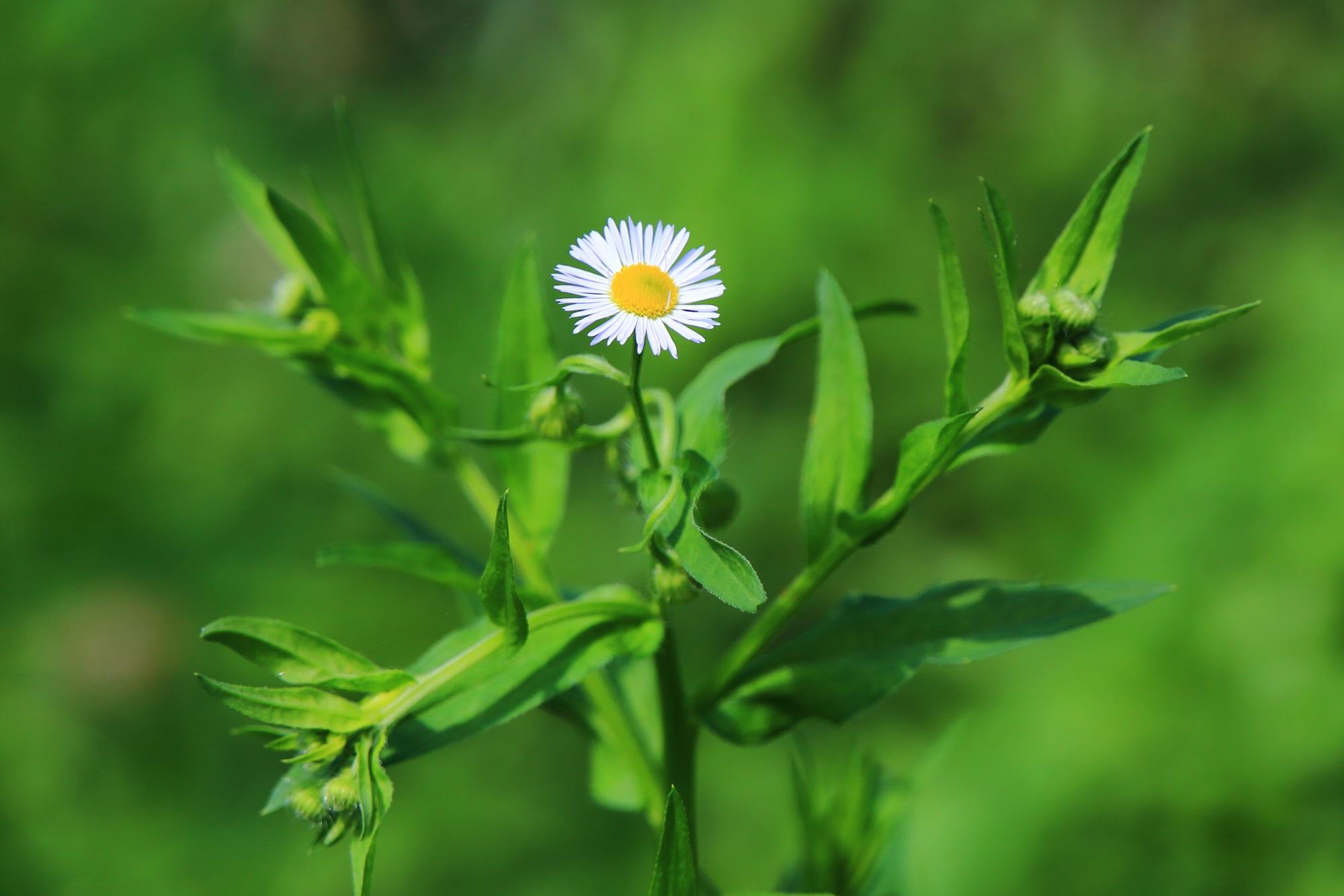 大覚寺大沢池畔に咲く可憐な野花